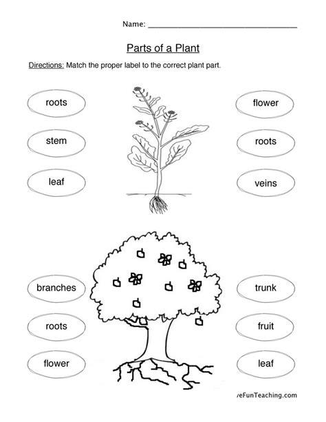 plant worksheets teaching 731 | plant parts worksheet