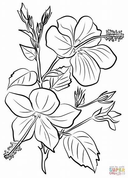 Hibiscus Coloring Pages Flowers Drawing Printable Yellow