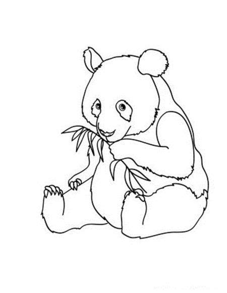 Kleurplaat Baby Panda by Baby Panda Tracys Coloring Book Of Animals