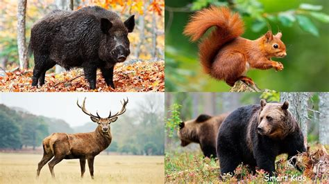 Learn names and Sounds of Forest animals Animals in