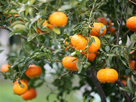 How To Select Fruit Trees Hgtv