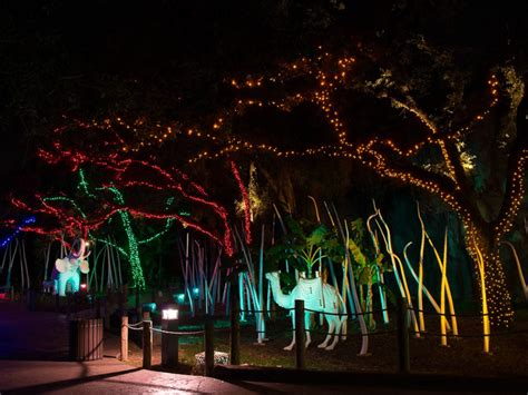houston s newest tradition zoo lights is a