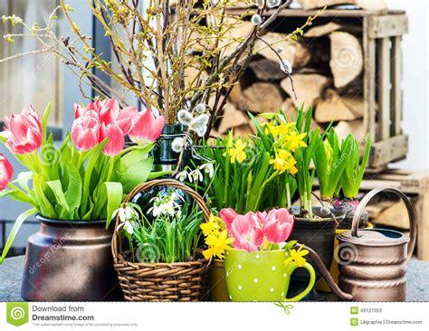 la maison des fleurs d 233 coration int 233 rieure 224 la maison de p 226 ques avec des fleurs de ressort photo stock image 40127053