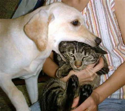 hund isst katze