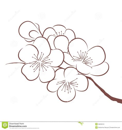 Spring Cherry Blossom Stock Vector Image 39030519