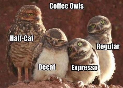 70+ buzzy coffee jokes and puns that'll give you latte laughs. Coffee meme   Meme Research Discussion   Know Your Meme