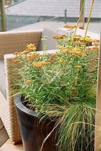 Pflanzen Für Dachterrasse : dachterrasse gestalten tipps und 42 tolle ideen haus garten terrassen zenideen ~ Bigdaddyawards.com Haus und Dekorationen