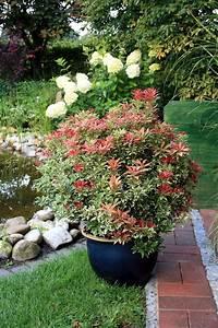 Sichtschutz Pflanzen Winterhart : balkonpflanzen sichtschutz ~ Frokenaadalensverden.com Haus und Dekorationen