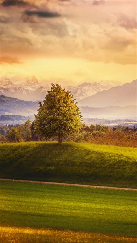 wallpaper switzerland   wallpaper  alps mountains meadows trees nature