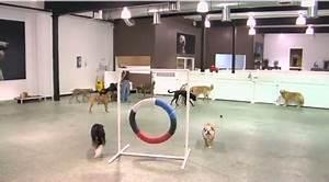 Hotel Pour Chien : video les h tels de luxe pour chiens une nouvelle ~ Nature-et-papiers.com Idées de Décoration