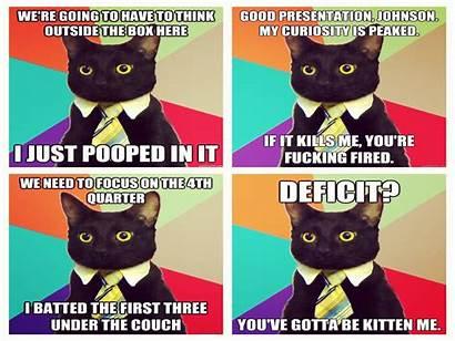 Meme Funny Cat Humor Grumpy Quote Wallpapers