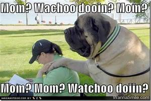 Dog pictures, Funny captions and Cute dog pictures on ...