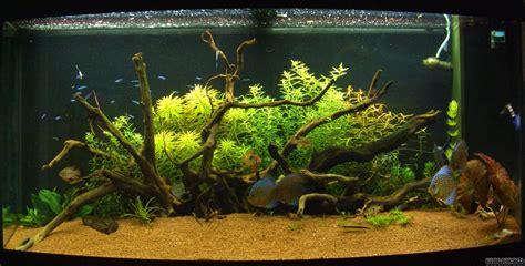 Diskus Wald  Flowgrow Aquascapeaquariendatenbank