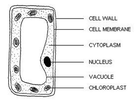 Pmr Revision Science Cell Basic Unit Life