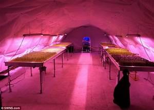 Subterranean kitchen garden created in WW2 bomb shelters ...