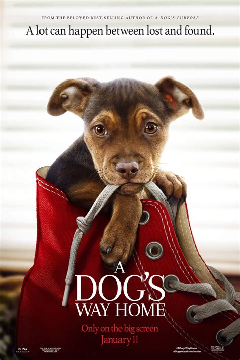 dogs  home  complets telechargement hd