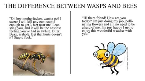 bee  wasp  handy chart  ign boards