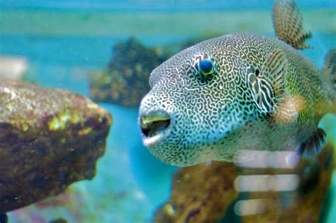 aquarium de canet en roussillon aquarium de canet en roussillon canet en roussillon 66140 pyr 233 n 233 es orientales 66