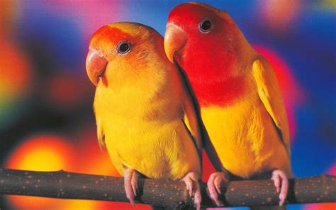 Animal And Bird Hd Wallpaper - birds animals pictures