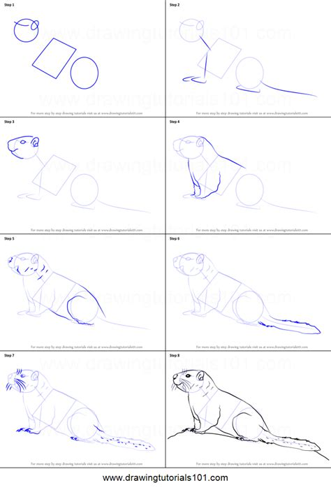 draw  yellow bellied marmot printable step  step