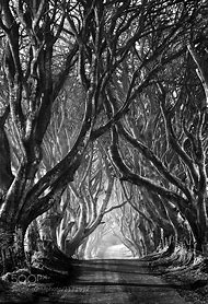 Black and White Photography Trees