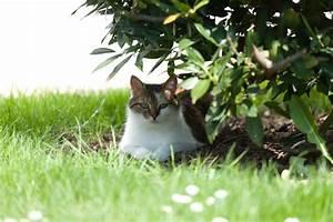 Kirschlorbeer Braune Blätter : kirschlorbeer hat braune bl tter woran kann 39 s liegen ~ Lizthompson.info Haus und Dekorationen