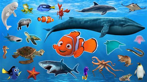 Sea Animals Pictures Group With 54 Items