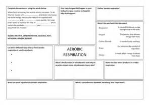 aerobic respiration worksheet by takht005 teaching