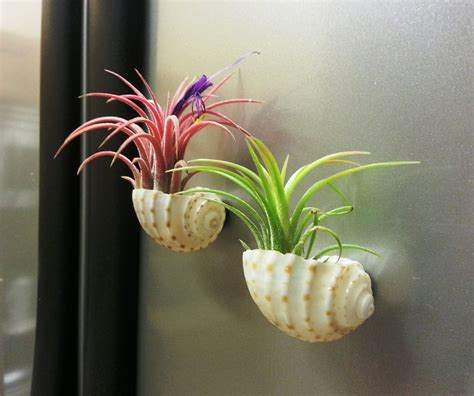air garden plants air plant display ideas and care tips small garden ideas