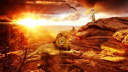 Africa Wallpapers African Lion Animal Bing