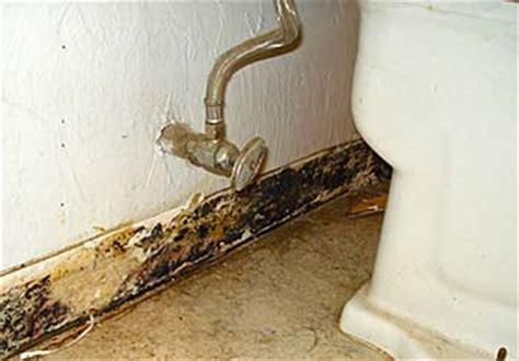 bathroom mold   prevent  remove bathroom mold
