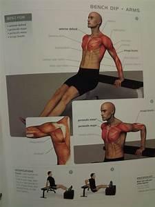Arms  Bench Dip  Anterior Deltoid  Triceps Brachii  Pectoralis Major  U0026 Minor    Reps