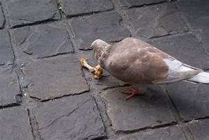 Wat eet een kip