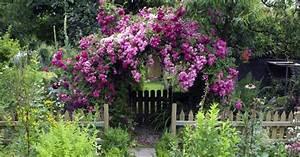 Blumen Für Schattige Plätze : pflanzen f r schattige pl tze im garten pflanzen f r ~ Michelbontemps.com Haus und Dekorationen