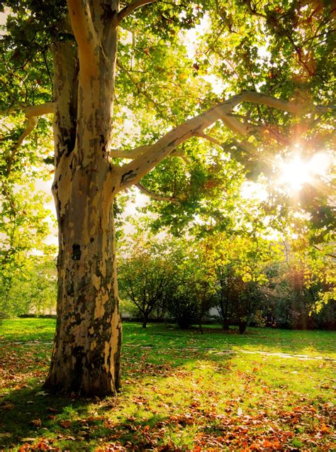 autumn tree background photohdx