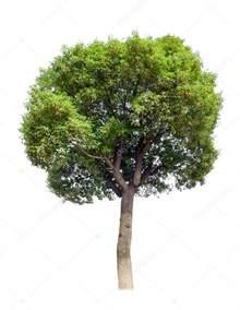 small tree chor stock photo gyn9037 20197553