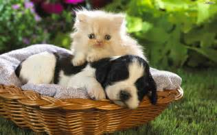 pictures of cats and dogs youwall friends and cat wallpaper wallpaper
