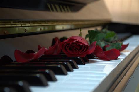 piano rose   photo  pixabay
