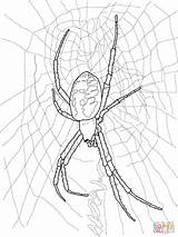 Spider Coloring Yellow Drawing Scary Printable Creepy Doll Furry Spiders Halloween Animals sketch template