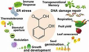 Biological Functions Of Salicylic Acid In Plants
