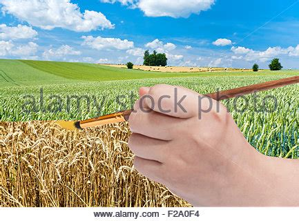 harvesting concept with paintbrush paints yellow harvest stock 87501104 alamy