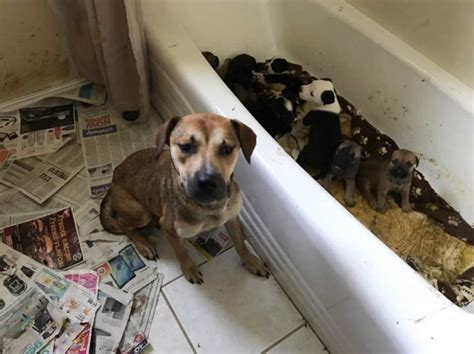 dogs  cats rescued  home  north texas