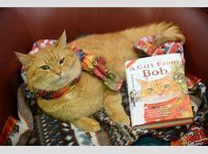 Look James Bowen and his cat Bob attract huge queues at
