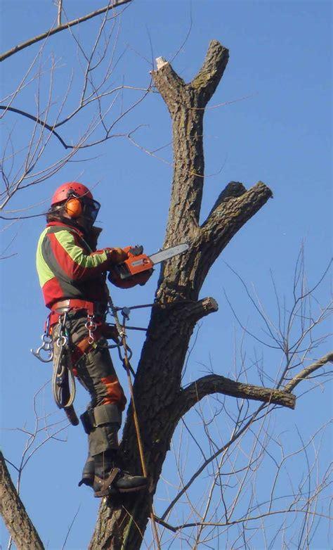 Baum Pflege by Baumpflege Oberhofer