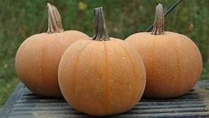 Pumpkins For 2014  Something Different