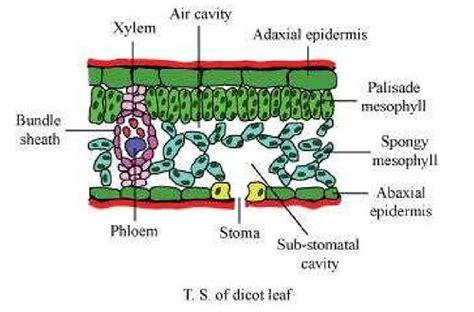 ncert solutions class  biology chapter  anatomy