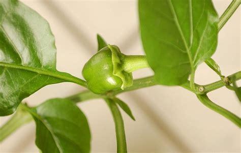 Vom Auspflanzen Bis Zur Ernte