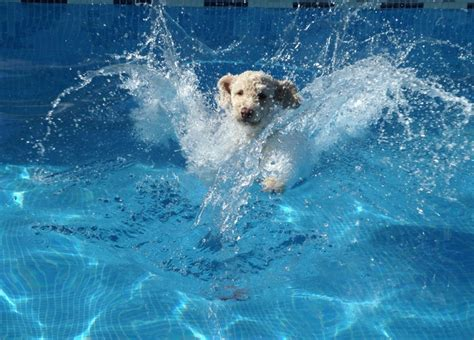 expert advice  swimming  dogs