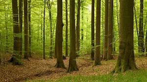 Bilder Vom Wald : sendung wdr swr ard alpha der wald die geheime sprache der b ume ~ Yasmunasinghe.com Haus und Dekorationen