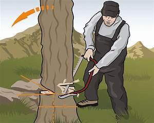 Baum Fällen Technik : instructor wie sie b ume richtig f llen bei outdoor ~ A.2002-acura-tl-radio.info Haus und Dekorationen